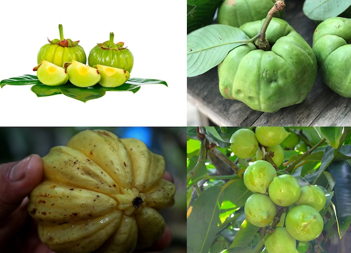 Garcinia Cambogia Fruit In Different Settings